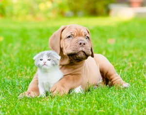 Puppy / Kitten Wellness
